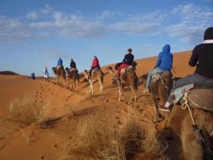 Camel-trekkin en el desierto